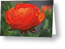 Begonia In The Morning Greeting Card