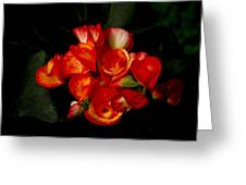 Begonias Greeting Card