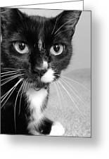 Bella The Cat Greeting Card by Danielle Allard
