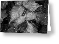 Bellevue Botanical Garden Leaves 6395 Greeting Card
