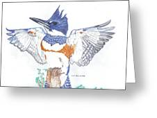 Belted Kingfisher Greeting Card by Don  Gallacher