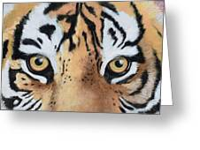 Bengal Eyes Greeting Card