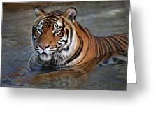 Bengal Tiger Laying In Water Greeting Card