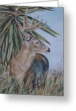 Berry Buck Greeting Card