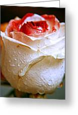 Bicolor Rose Greeting Card