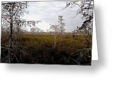 Big Cypress Greeting Card