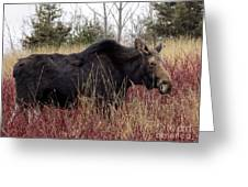 Big Mama Moose Greeting Card