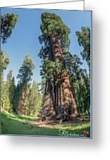 Big Tree Trail - Sequoia National Park - California Greeting Card