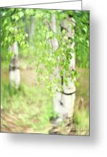 Birch In Spring Greeting Card