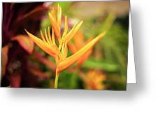 Bird Of Paradise Plant In The Garden. Greeting Card