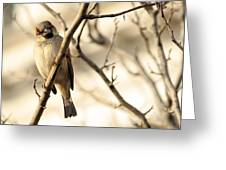 Bird On A Limb Greeting Card
