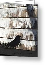 Bird Silhouette Greeting Card