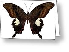 Black And Brown Butterfly Species Papilio Nephelus Greeting Card