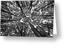 Black And White Nature Detail Greeting Card