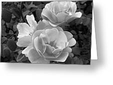Black And White Roses 2 Greeting Card