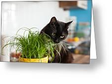 Black Cat Eating Cat Grass Greeting Card