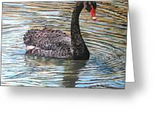 Black Swan On Water Greeting Card