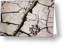 Blair Cracked Mud 1685 Greeting Card