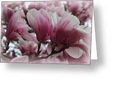 Blooming Pink Magnolias Greeting Card