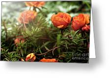 Blossomed Greeting Card