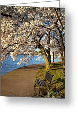 Blossoming Cherry Trees Greeting Card