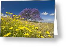 Blossoming Jacaranda Greeting Card