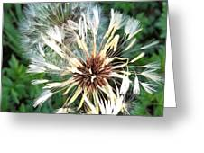 Blown Wishes 2 Greeting Card