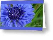 Blue Cornflower Greeting Card