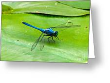 Blue Dragonfly On Lily Pad Greeting Card