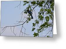 Blue Jay In Tree Greeting Card