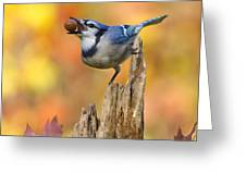 Blue Jay With Acorn Greeting Card