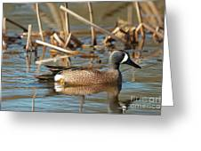 Blue Winged Teal Greeting Card