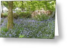 Bluebells On Dartmoor Greeting Card