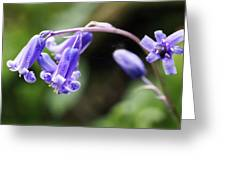 Bluebells Greeting Card