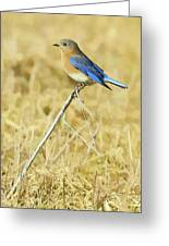 Bluebird In February Greeting Card