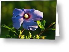 Bluebird Rose Of Sharon Greeting Card