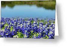 Bluebonnets Greeting Card