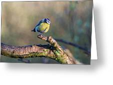 Bluetit On A Branch Greeting Card