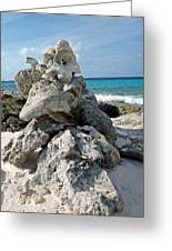 Bonaire Coral And Shells 3 Greeting Card