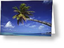 Bora Bora, Palm Tree Greeting Card