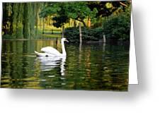 Boston Public Garden Swan Green Reflection Greeting Card