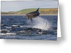 Bottlenose Dolphin - Scotland  #14 Greeting Card