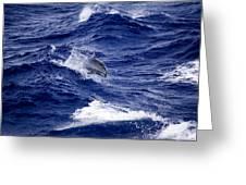Bottlenose Dolphin Tursiops Truncatus Greeting Card