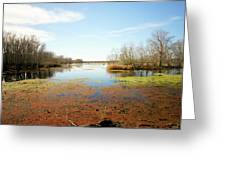 Brazos Bend Winter Wetland Greeting Card