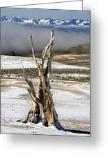 Bristlecone Fog And Sierra Nevada 1 Greeting Card