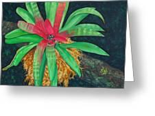 Bromeliad Greeting Card by Charles Yates