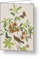 Brown Headed Worm Eating Warbler Greeting Card