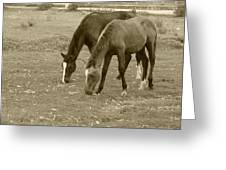 Brown Horses Grazing Greeting Card