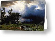 Buffalo Trail  The Impending Storm Greeting Card