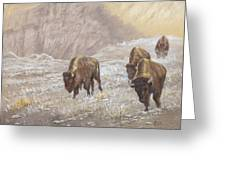 Buffalo Under The Alpenglow Greeting Card